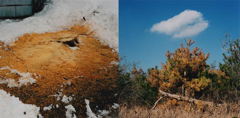 船木 菜穂子|Nahoko Funaki 作品(2)の画像