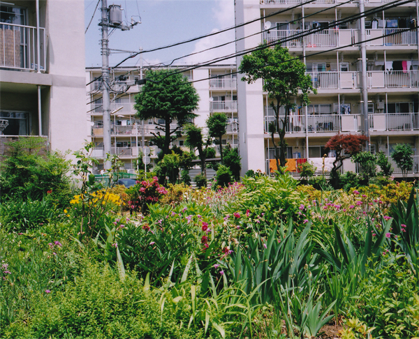 hakoyama2