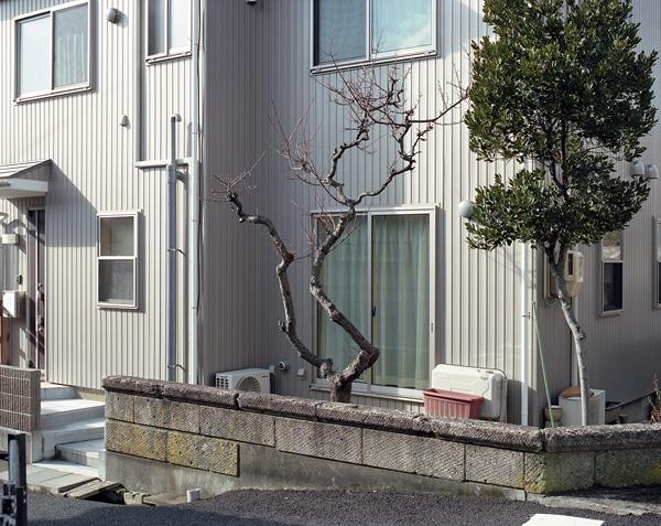 榎本 千賀子|Chikako Enomoto 作品(1)の画像