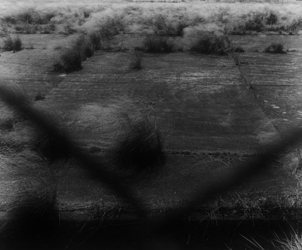 由良 環|Tamaki Yura 作品(2)の画像